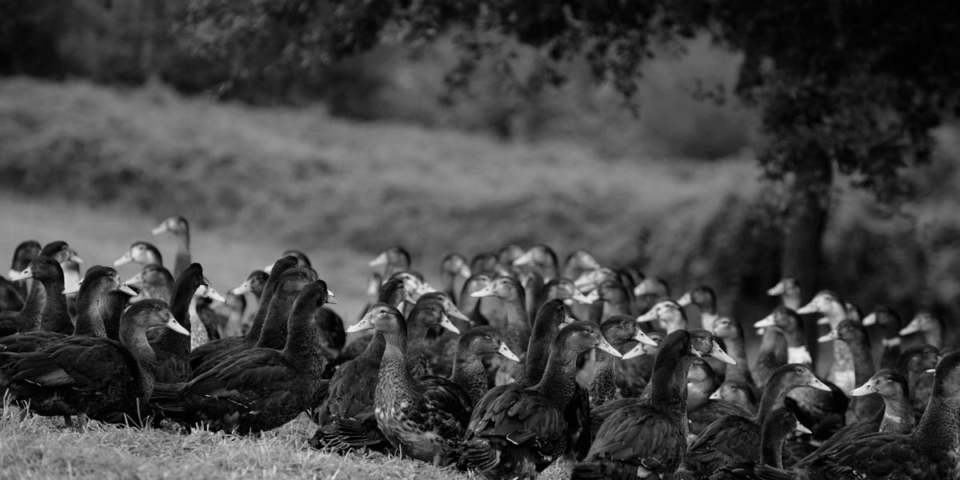 La Ferme du Foie Gras